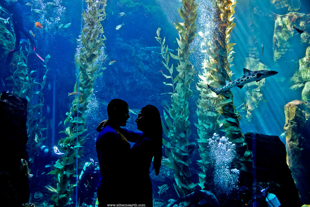 California Science Center Engagement-2245